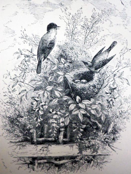The Bird, Michelet, Jules