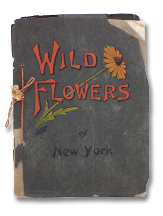 Wild Flowers of New York, Reed, Chester A.